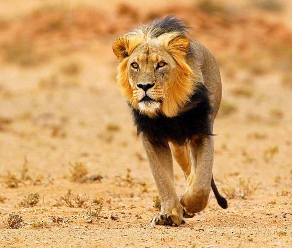 african wildlife safari