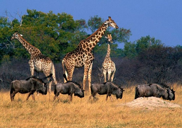 botswana safari packages