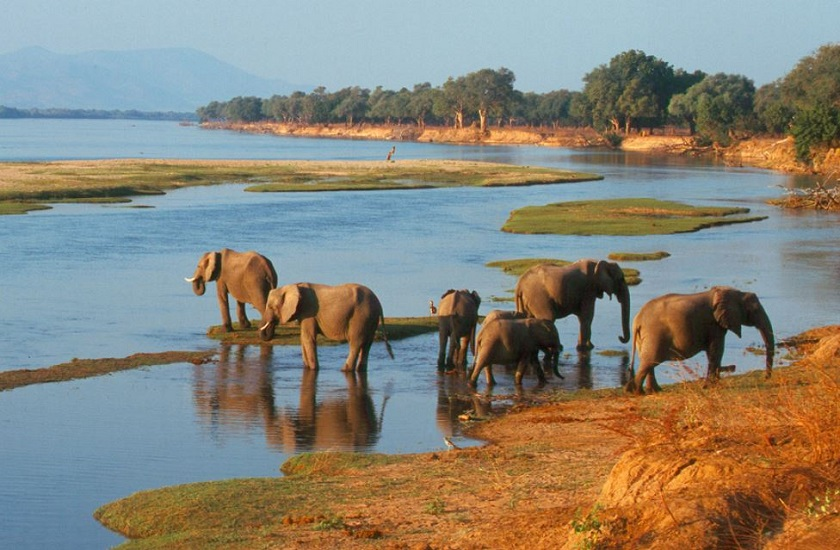 african safari specialists