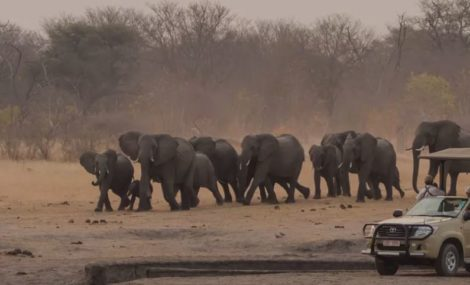 african safari tour companies