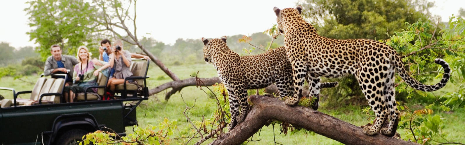 Leopard Viewing In Africa