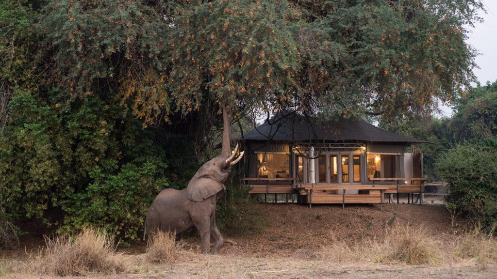 Chikwenya-Camp
