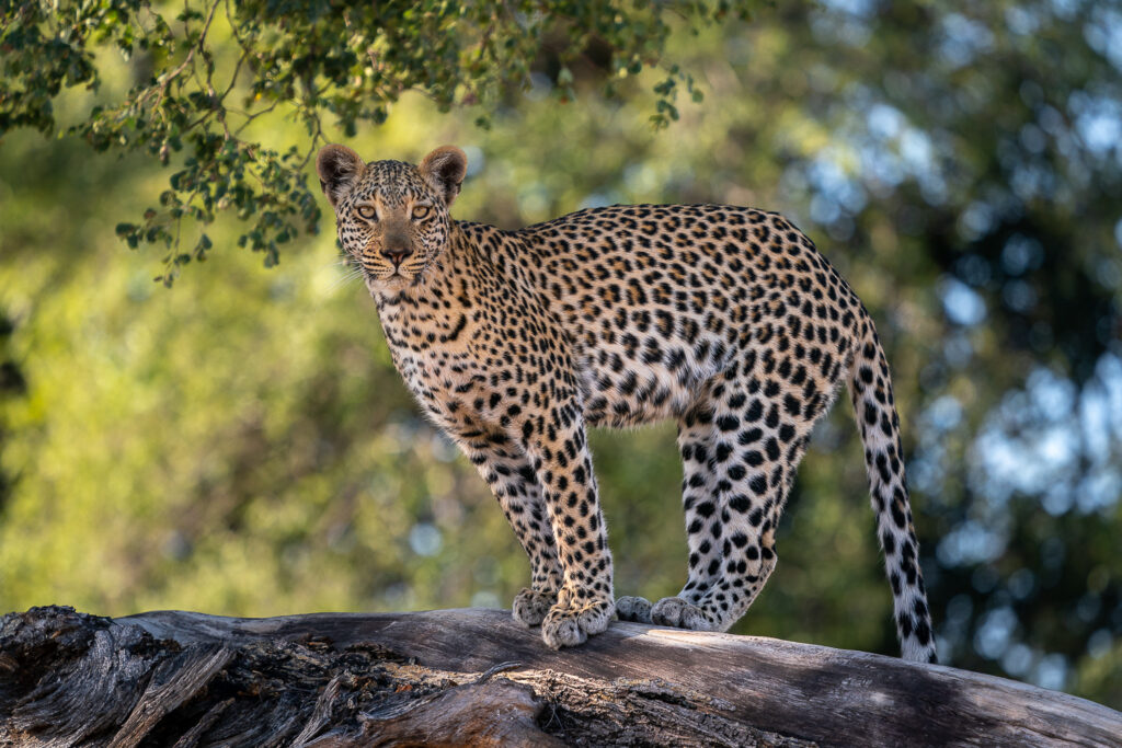 Jao-Camp-Wildlife