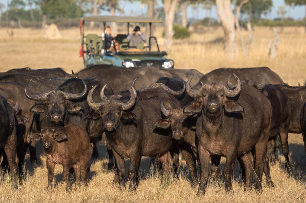Linkwasha-Camp-Wildlife