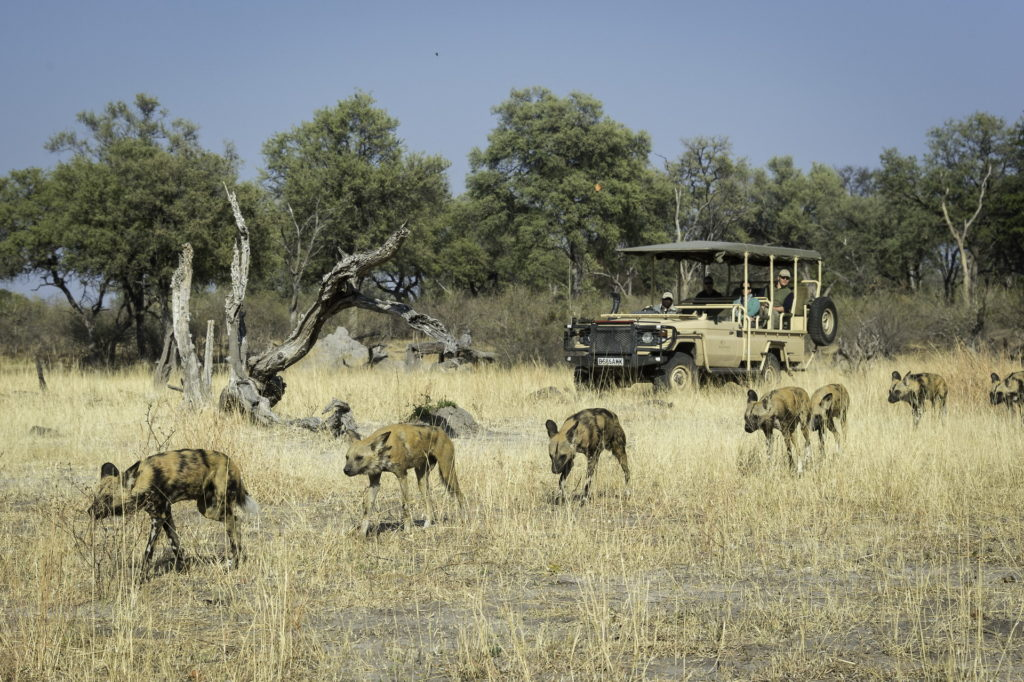 Linyanti-Tented-Camp-Game-Drive-Activity
