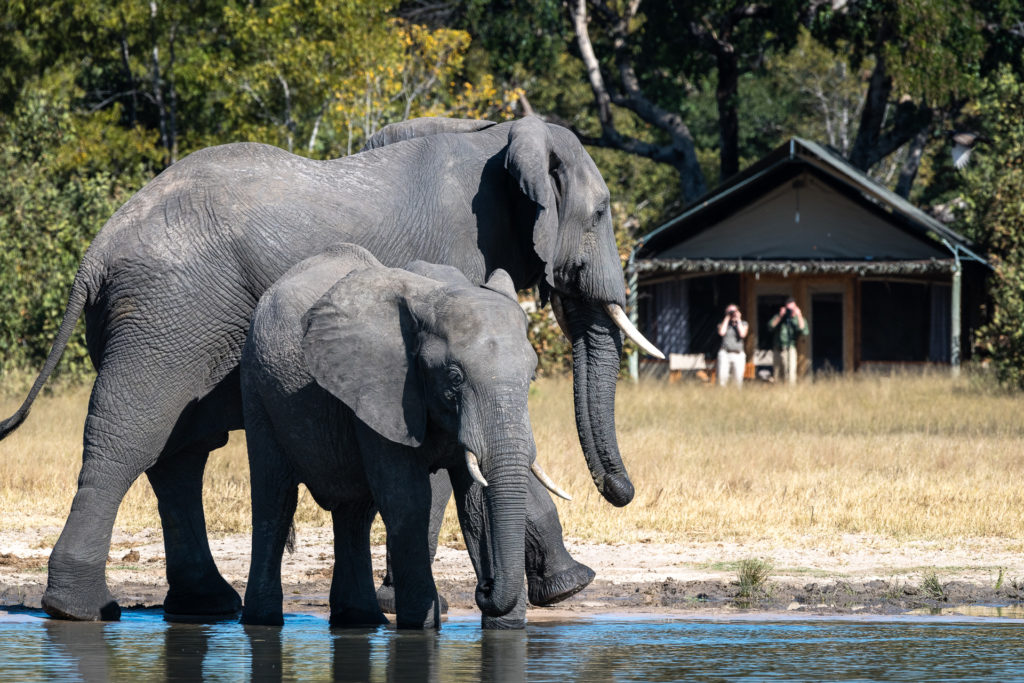 Little-Makalolo-Elephants