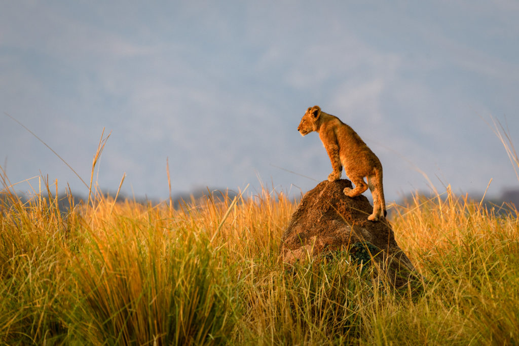 Little-Ruckomechi-Wildlife