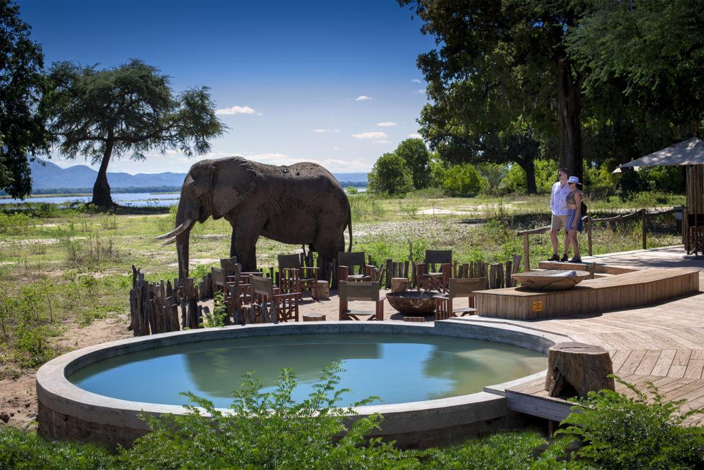 Nyamatusi-Camp-Wildlife