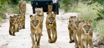 Sensational Cape Town & Sabi Sands Game Reserve
