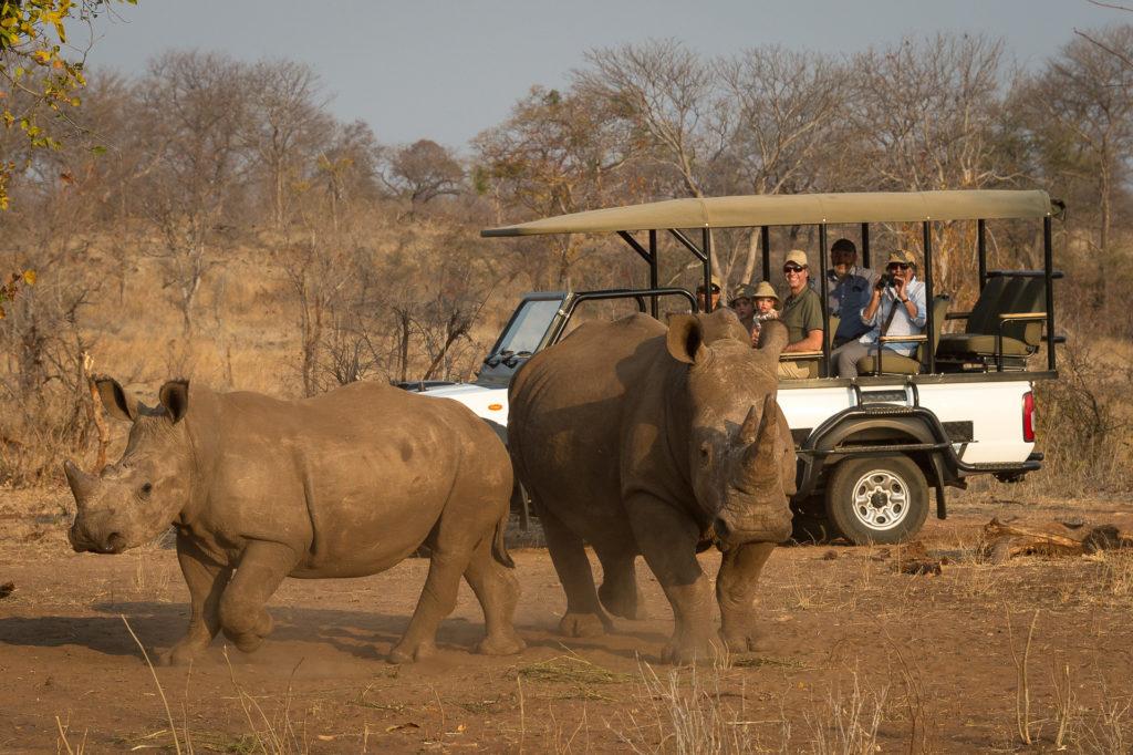 Toka-Leya-Rhino