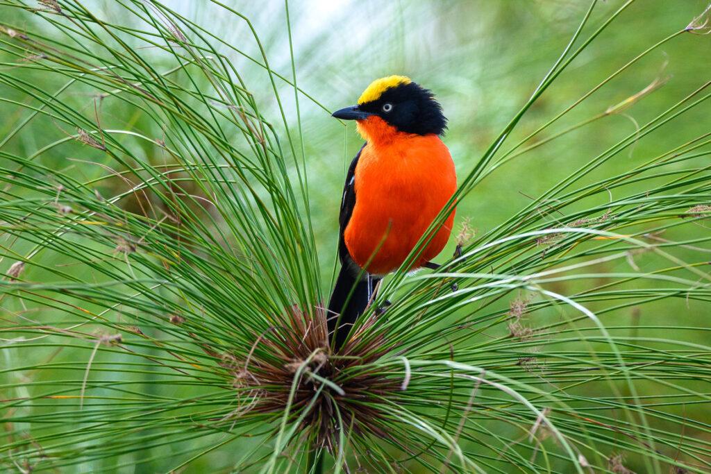 magashi-birdlife